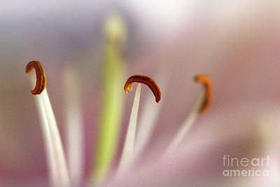 Photograph - Morning by Karen Adams