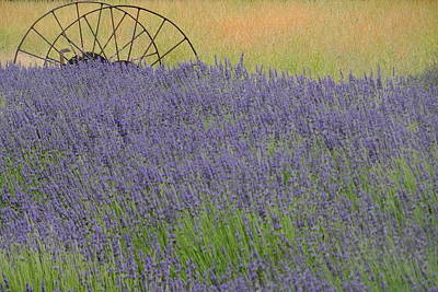 Photograph - Morning Lavender by My Lens and Eye   - Judy Mullan -