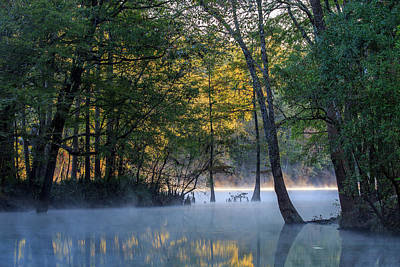 Photograph - Morning Light At Ginnie Springs by Stefan Mazzola