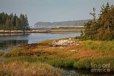 Morning Light At Schoodic  Art Print by Susan Cole Kelly
