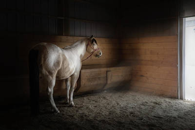 Photograph - Morning Light by Debby Herold