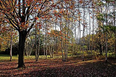 Photograph - Morning Light In Autumn by Debbie Oppermann