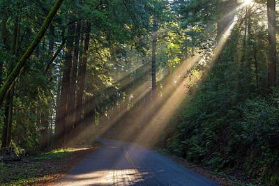 Photograph - Morning Light by Janet Kopper