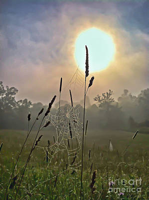 Photograph - Morning Light by Kerri Farley