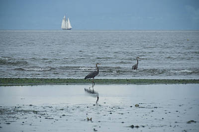 Photograph - Wading In Shallow Waters by Marilyn Wilson