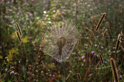 Photograph - Morning Light On Spiderweb by Christina VanGinkel