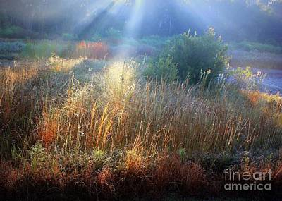 Morning Light On The Marsh Art Print