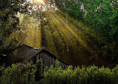 Photograph - Morning Light by Ron Grafe