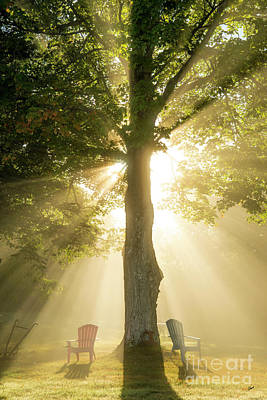 Photograph - Morning Light Shining Down by Alana Ranney