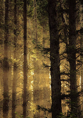 Photograph - Morning Light Through The Trees by Don Schwartz