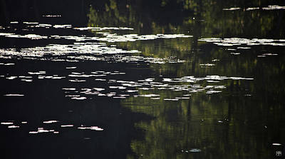 Photograph - Morning Lily Pads by John Meader