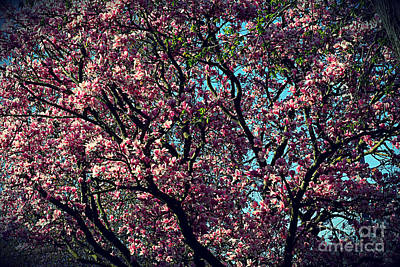 Frank J Casella Royalty-Free and Rights-Managed Images - Morning Lit Magnolia by Frank J Casella