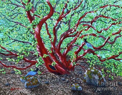 Bluejay Painting - Morning Manzanita by Laura Iverson