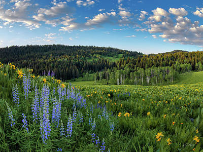 Photograph - Morning Meadow by Leland D Howard