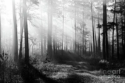 Fruits And Vegetables Still Life - Morning Mist in the Forest by Gary Richards