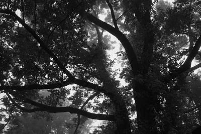 Photograph - Morning Mist In The Tree Tops by Polly Castor
