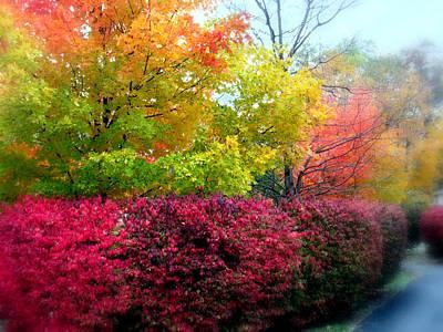 Autumn Foliage Photograph - Morning Mist by Jessica Jenney