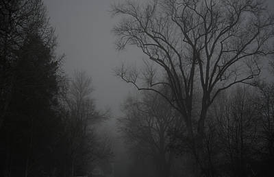 Photograph -  Morning Mists And Trees -1 by Rae Ann  M Garrett