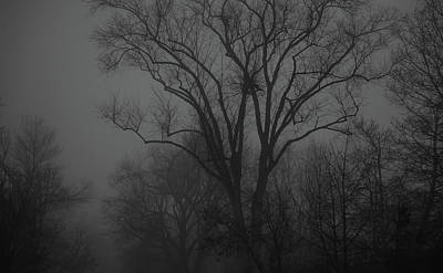 Photograph - Morning Mists And Trees -2 by Rae Ann  M Garrett
