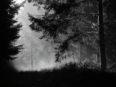Photograph - Morning Mists At Wilsey Woods by Bear R Humphreys