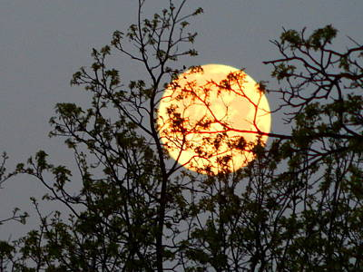 Photograph - Morning Moon Headed West by Virginia Kay White
