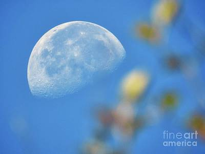 Photograph - Morning Moon by Peggy Hughes