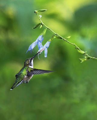 Photograph - Morning Nectar by Art Cole