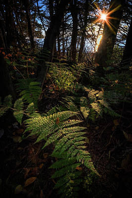 Quoddy Photograph - Morning On The Coastal Trail by Rick Berk