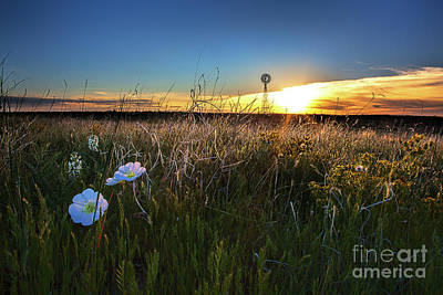 Photograph - Morning On The Grasslands by Jim Garrison