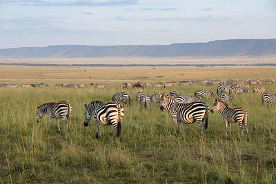 Photograph - Morning On The Mara by Michele Burgess