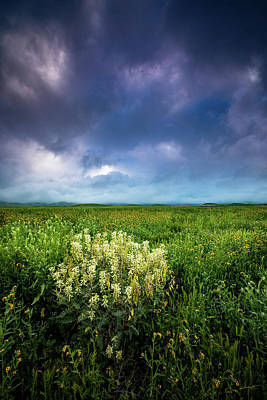 Fiddleneck Photograph - Morning On The Plain by Dan Holmes