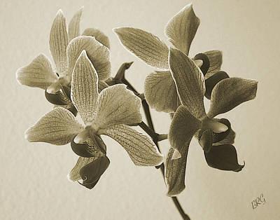 Ben Gertsberg Photograph - Morning Orchid by Ben and Raisa Gertsberg