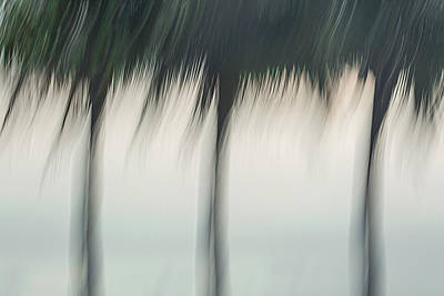 Morning Palms Art Print by Jennifer