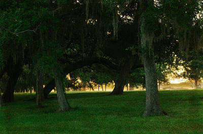 Photograph - Morning Park Stroll by Tikvah's Hope