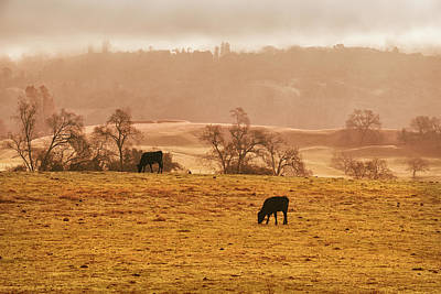 Photograph - Morning Pasture by Frank Wilson