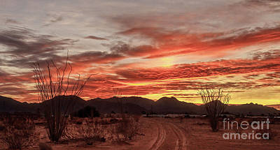 Photograph - Morning Path by Robert Bales