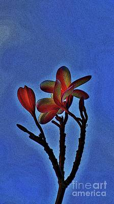 Photograph -  Morning Plumeria by Craig Wood