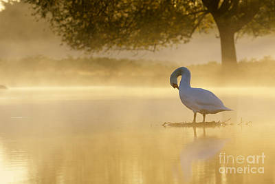 Photograph - Morning Preen by Paul Farnfield