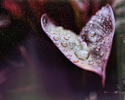 Still Life Royalty-Free and Rights-Managed Images - Morning Rain by Judy Vincent