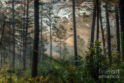 Photograph - Morning Rays by Larry McMahon