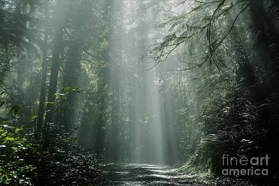 Photograph - Morning Rays by Sheila Ping