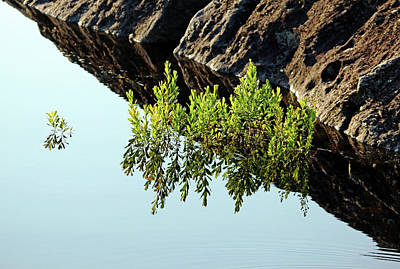 Photograph - Morning Reflections by Debbie Oppermann
