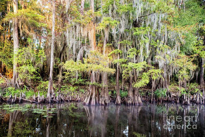 Photograph - Morning Reflections On Big Cypress Bayou by Scott Pellegrin