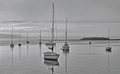 Photograph - Morning Rest In Black And White by HH Photography of Florida