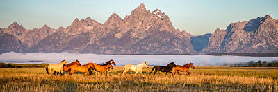 Animals Photos - Morning Roundup at Triangle X Ranch by Matt Hammerstein