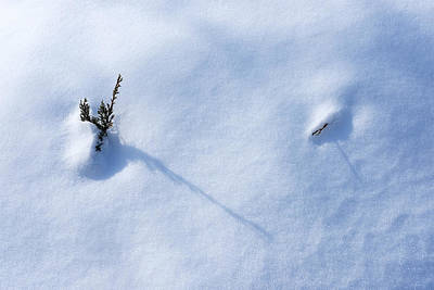 Photograph - Morning Shadows On The Snow by Monte Stevens