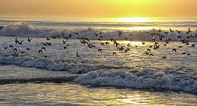 Photograph - Morning Shorebirds by John Loreaux