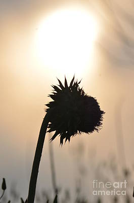 Photograph - Morning Silhouette by Maria Urso