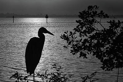 Photograph - Morning Silhouettes by HH Photography of Florida