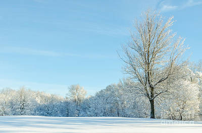 Photograph - Morning Snow by Mike Ste Marie
